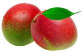 манго — Стоковое фото