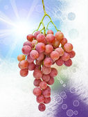 Grapes on bright background — Stock Photo