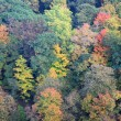 Stock Photo: Aerial view of colorful forest