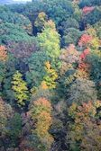 Aerial view of colorful forest — 图库照片