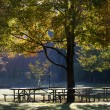 Sunlight Through An Autumn Tree — Stockfoto