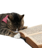 Nice kitty with bandana beside an old book — Stock Photo