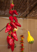 Peppers and pumpking hanging — Stock Photo