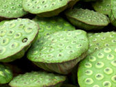 Lotus seed pods — Stock Photo