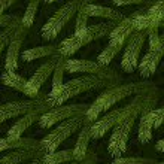 Christmas tree fir branch seamless background — Stock Vector #7103405