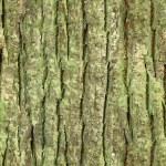 Seamless tree bark, rind texture — Stock Photo