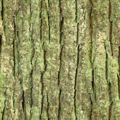 Seamless tree bark, rind texture — Stock Photo