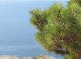 Seascape with pine — Foto Stock