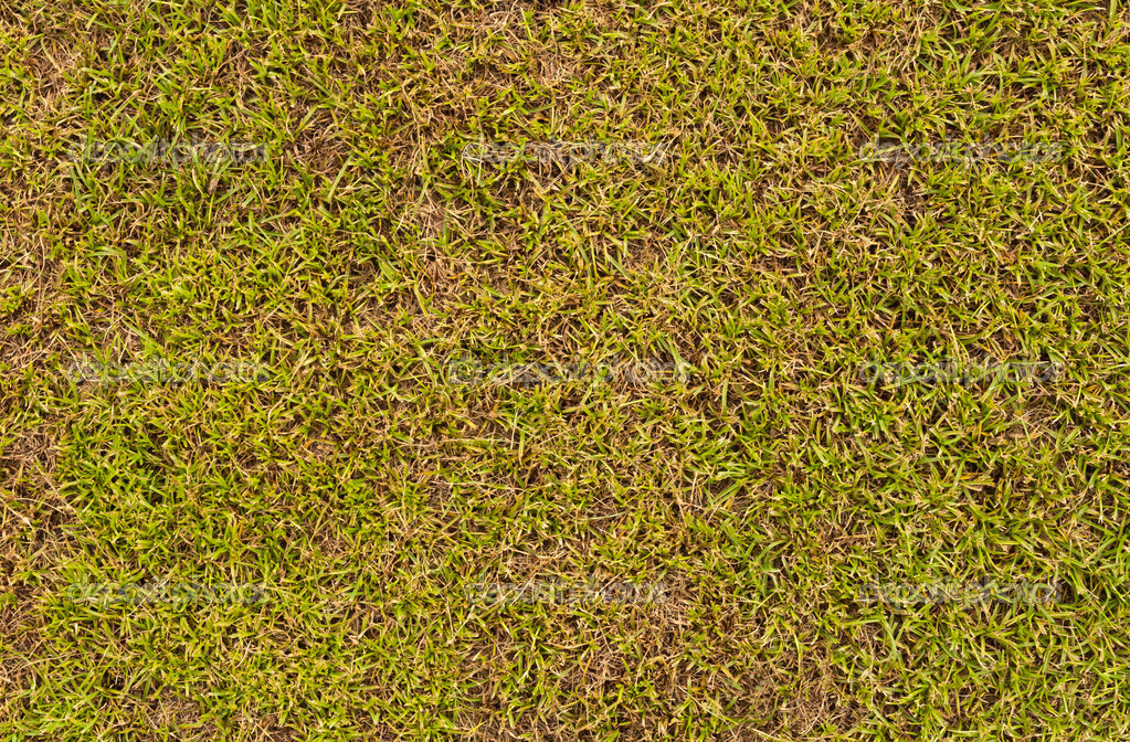 Grass field surface texture can use as background — Lizenzfreies Foto #6843133