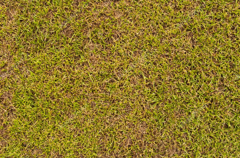 Grass field surface texture can use as background — Foto de Stock   #6843133