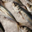 Fresh fish — Stock Photo #7001880
