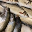 Fresh fish — Stock Photo #7002099
