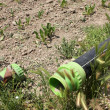 Stock Photo: Drip irrigation