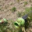 Foto de Stock  : Drip irrigation