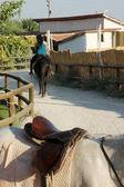 Paard boerderij — Stockfoto