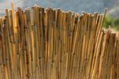 Reed fence — Stock Photo