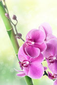 Beautiful orchid flowers and bamboo on blurred natural backgroun — Stock Photo