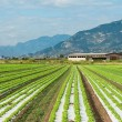 Agricultural fields in Northern Italy — Stock Photo