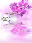 Beautiful purple orchid flowers reflected in the water — Stock Photo