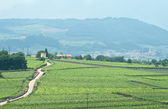 Overview of a road through italian vineyards — Stock Photo