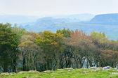 осенний пейзаж в пик дистрикт — Стоковое фото