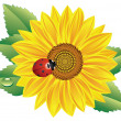Stock Vector: Sunflower and red ladybird