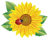 Sunflower and red ladybird — Stock Vector