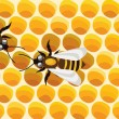 Royalty-Free Stock Imagem Vetorial: Bees on honeycells