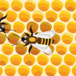 Royalty-Free Stock : Bees on honeycells
