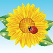Sunflower and red ladybird — Stock Vector #7353905
