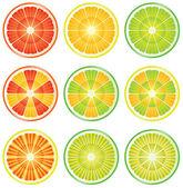 Citrus slices — Stock Vector