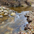 Stock Photo: Creek with fallen leaves