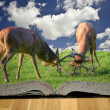 Fighting red deer stags in pages of magical story book — Stock Photo
