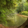 Stock Photo: Beautiful forest scene of enchanted stream flowing through lush