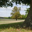 A distant Windsor Castle viewed through trees in Windsor Great P — Stock Photo