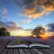 Creative concept image of lavender  in Summer sunset in page sof - Stock Photo