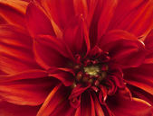 Beautifully toned macro close up of flower — Stock Photo