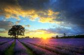 Deslumbrante pôr do sol atmosférico sobre campos de lavanda vibrante em summ — Fotografia Stock