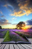 Creative concept image of atmospheric sunset lavender fields i — Stock Photo