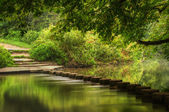 Beautiful forest scene of enchanted stream flowing through lush — Stock Photo