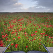 Creative concept idea of poppy field landscape coming out of pag — Foto Stock