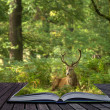 Creative concept of Red Deer Stag coming out of pages in magical - Stock Photo