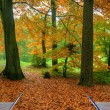 Creative concept idea of Beautiful Autumn Fall forest scene in p - Stock Photo