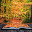 Creative concept idea of Beautiful Autumn Fall forest scene in p — Stock Photo