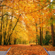 Creative concept idea of Beautiful Autumn Fall forest scene in p — Stock Photo #7030772