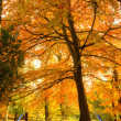 Creative concept idea of Beautiful Autumn Fall forest scene in p — Stock Photo #7030956