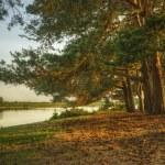 magiska fantasy stil skogens scenen med sjön under solnedgången — Stockfoto #7032021