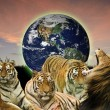 Creative concept image of wild cats protecting the planet Earth — Stockfoto