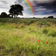 Beautiful rainbow in dark storm clouds over vibrant lavender fie - Stock Photo