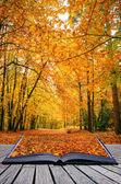 Kreativní koncept představu o krásný podzim podzim lesní scény v p — Stock fotografie